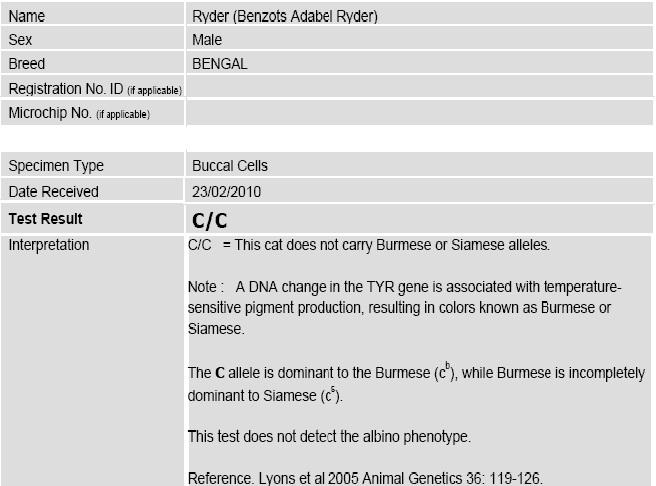 Adabel Snow Bengals Australia Bengal Colour Genetics